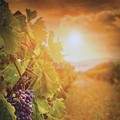 Crop Report: Northeast Ohio Wine Makers Check In On This Year's Batch