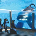 Film Spotlight: Blackfish