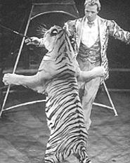 """Good tiger, good tiger."" Mark Oliver Gebel dances - with a really big cat."