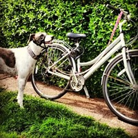 10 Fun Summer Things to do With Your Dog in Cleveland Head out for a relaxing bike ride, canine companion by your side, through Lakewood's historic neighborhoods. There are plenty of harnesses and bike attachments available to ensure your dog doesn't topple you over in hot pursuit of a squirrel. Photo Courtesy of anneheathen, Flickr Creative Commons