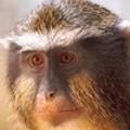 Hey, Hey, They're the Monkeys