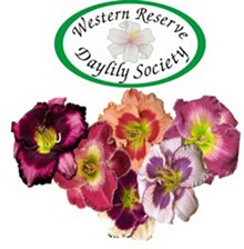 Hybrid daylily collector plants available!