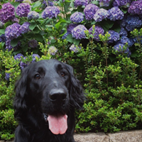 10 Fun Summer Things to do With Your Dog in Cleveland If you're looking for somewhere serene, frolic through the flowers with your pooch at Holden Arboretum. These botanical gardens are oftentimes a little more peaceful than a dog park. Photo Courtesy of anneheathen, Flickr Creative Commons