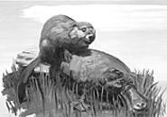 Its a Wonderful Life: Jason Sleurss animal - paintings can be seen at Spaces through May 14.
