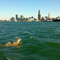 Lake Erie: Algae Blooms Ensure Ongoing Threat