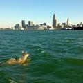 Lake Erie: Algae Blooms Ensure Ongoing Threat