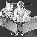 Good to Be Bat