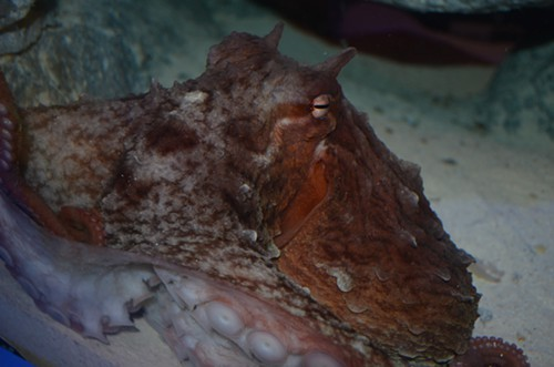 Name this octopus!