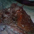 You Can Name The Akron Zoo's New Octopus