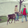 Photo: Someone Brought a Reindeer to the Browns Game