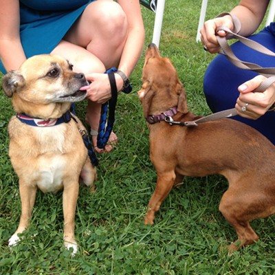 PHOTOS: The Most Adorable Pooches Spotted Yesterday at Ale Fest