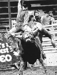 Points well taken: The daring men of the World's Toughest Rodeo.