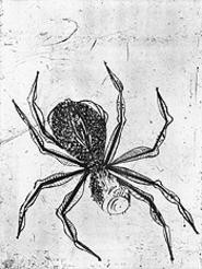 """Spider,"" by Louise Bourgeois, drypoint."