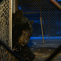State Threatening Lodi Couple With Forced Removal of Pet Bear