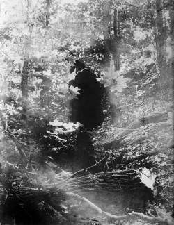 1584_artsvisnarcissus.jpg