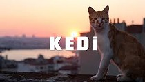 Cedar Lee Theatre Partners with Local Cat Shelters for 'KEDI' Screenings