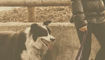 Cleveland-Made 'Fetch' Dating App Hopes to Bring Dog Lovers Together
