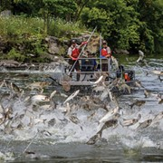 Ohio Joins Group in Support of Federally Funded Project to Block Carp from Great Lakes