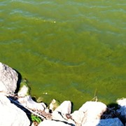 The First 2018 Lake Erie Algal Bloom Forecast is Here, and It's Not Pretty