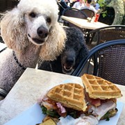 Kasich Signs Bill Allowing Dog-Friendly Patios in Ohio, So Cleveland Can Stop Breaking The Law