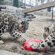 These Cleveland Metroparks Zoo Animals Are Way Cuter Than Your Valentine