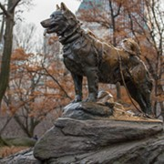Celebrate Balto's 100th Birthday This Weekend at the Cleveland Museum of Natural History