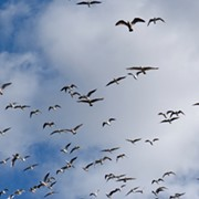 'Lights Out Cleveland' Wants City to Shut Off Lights to Help Save Migrating Birds