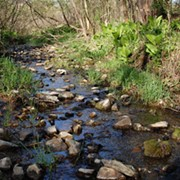 Still Three Weeks Left to Comment on EPA's Plan to Reduce Stream Protections