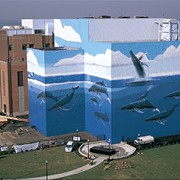 Gigantic Cleveland Whale Mural Off I-90 is Getting a Fresh Update