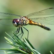Hordes of Dragonflies Are Showing Up On Cleveland Doppler Radar