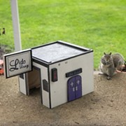 A Cleveland Hero Has Made a Lido Lounge for Squirrels