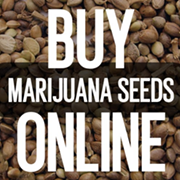 Where to Buy Marijuana Seeds Online: The BEST Seed Banks to Order Quality Weed Seeds to the USA