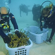 Greater Cleveland Aquarium To Host Virtual World Premiere of Documentary Film About Coral Reef Restoration