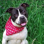 """Lower Adoption Fees for """"Christmas in July"""" at Cleveland City Kennel"""