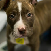 Cleveland APL Reduces Pet Adoption Costs Until Saturday After Reaching Critical Level