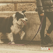 Cleveland-Made 'Fetch' Dating App Hopes to Bring Dog Lovers Together