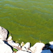 Government Report Says Great Lakes in Bad Condition, Lake Erie Worst of the Bunch