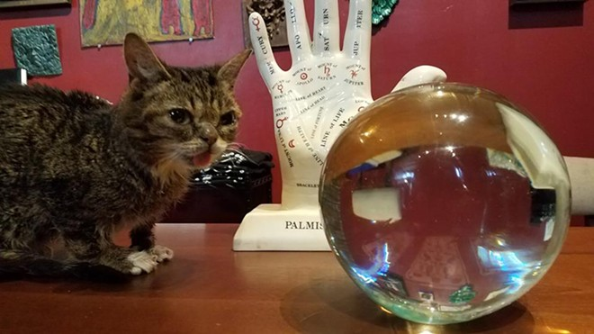 Famed  internet cat Lil Bub stopped by the Buckland Gallery of Witchcraft & Magick earlier this year while in town for a Cleveland Animal Protective League fundraiser. - PHOTO VIA BUCKLAND GALLERY OF WITCHCRAFT & MAGICK/FACEBOOK