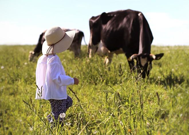 Farm tours are back - ADOBESTOCK
