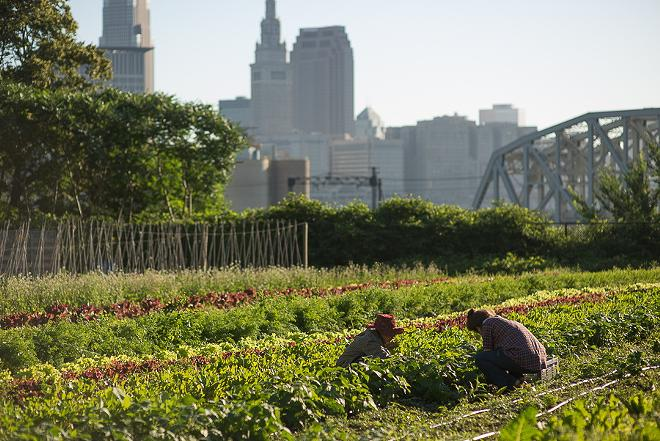 This six-acre urban farm in Ohio City is the site of the annual Refugee Response benefit. - BILLY DELFS