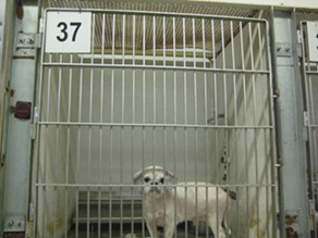 FRIENDS OF THE CLEVELAND KENNEL