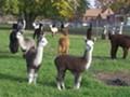 """Alpaca Yoga """"Cleveland"""" Style!"""