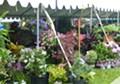 Plant Sale at the Holden Arboretum