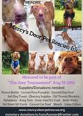The Joey Softball Tournament with Mercy's Door Pet Rescue