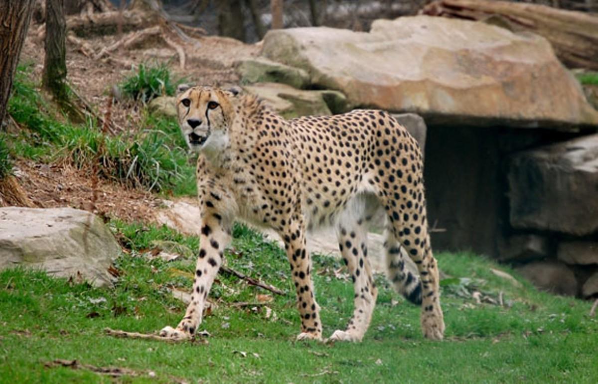 cleveland_metroparks_zoo_ohio_usa-8a.jpg