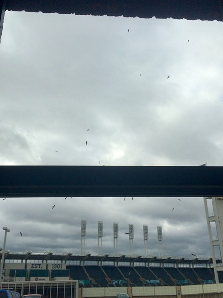 Midges waiting to attack just outside the Scene offices. - LAURA MORRISON PHOTO