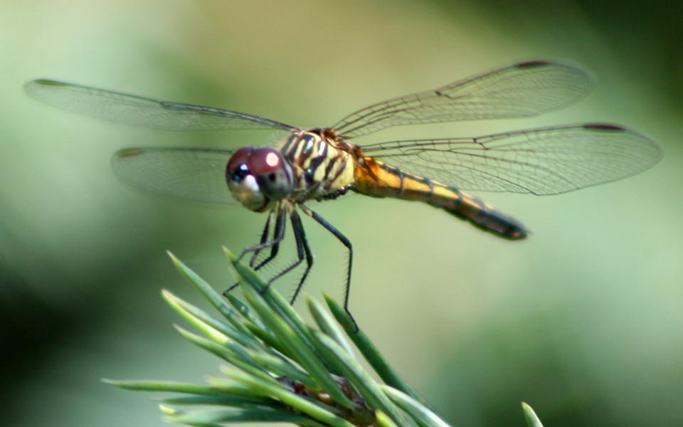 dragonfly_ran-387.jpg