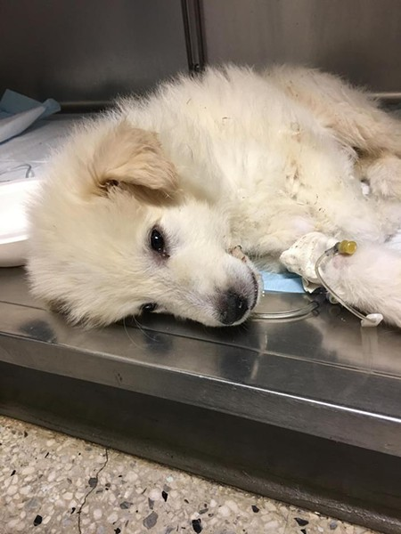 Mario died in January from Parvo contracted at the mill on Lennox Avenue. - TRUTHABOUTCLEVELANDNOKILL / FACEBOOK