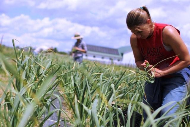 Site de matchmaking pour les agriculteurs