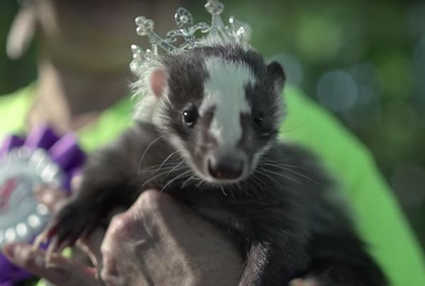 Skunks, skunks, and more skunks - VICE SCREENSHOT